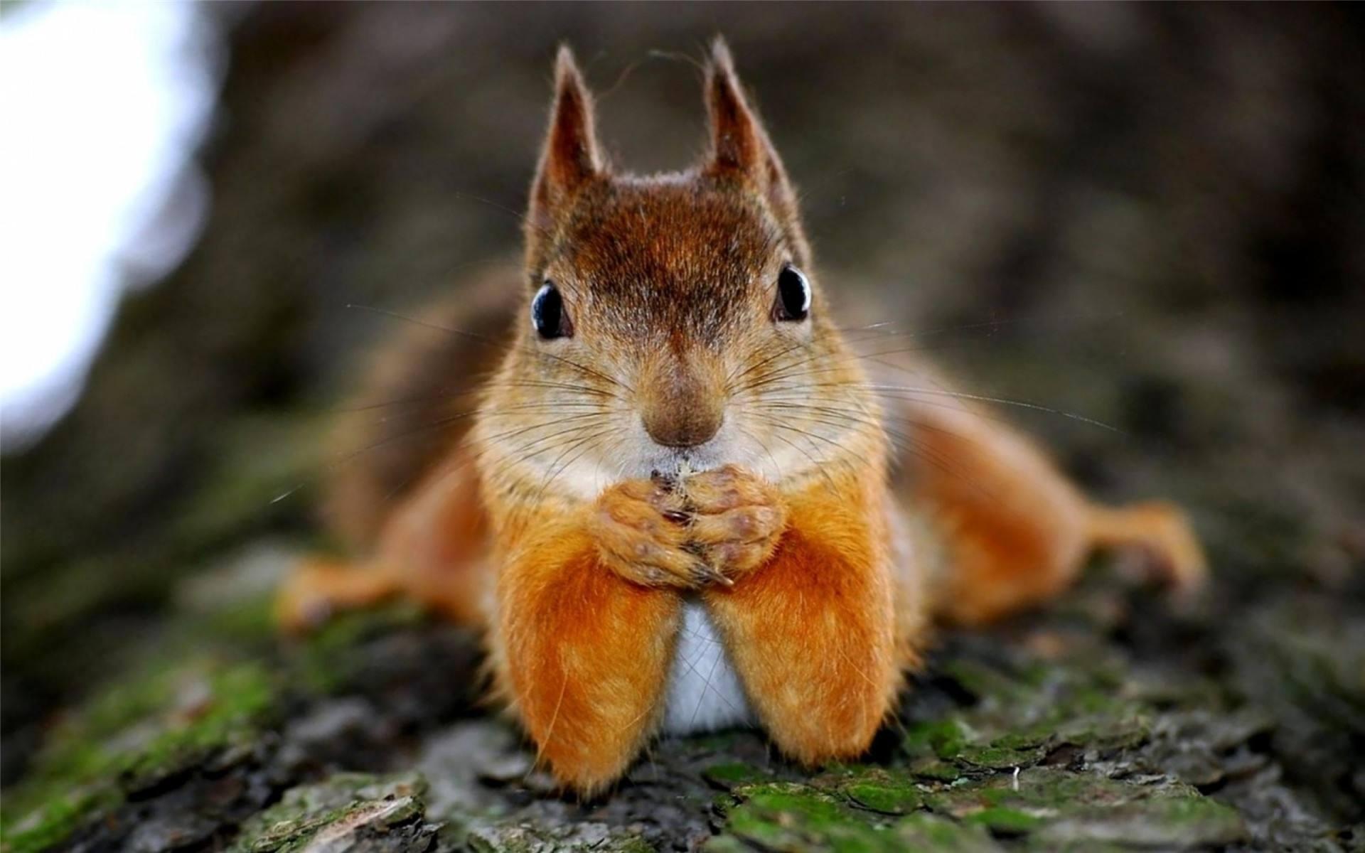 松鼠喂食馆中有200多只小松鼠们和小朋友们一起嬉戏.
